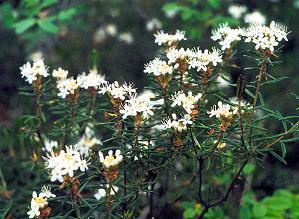 Лікарські рослини косметика